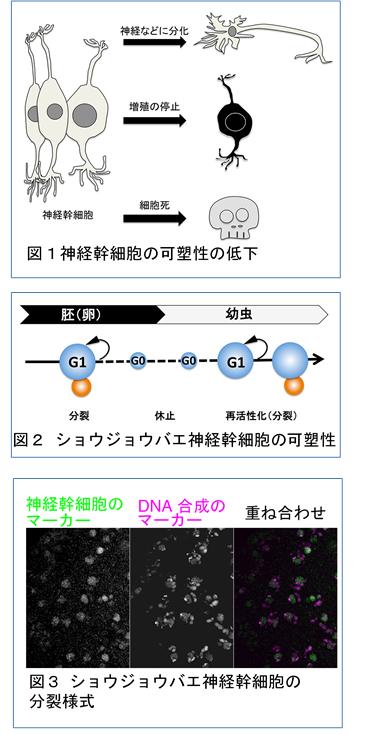 ハエチーム1